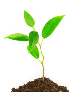 planeta-vegetariano-planta-dor