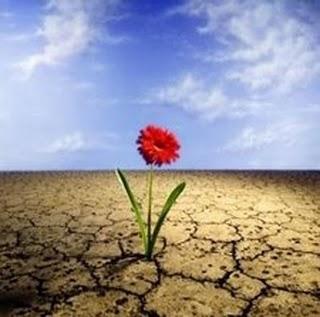 plantando-sementes